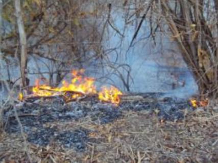 Aridez aumenta risco de queimadas no Sertão